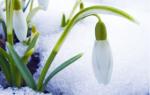 Прикольные поздравления с первым днем весны смс. Прикольные поздравления на первый день весны