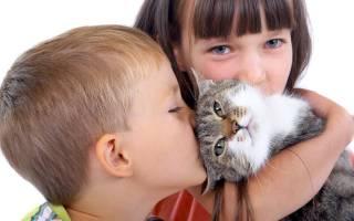 Какое домашнее животное подарить ребенку? Какое животное подарить ребенку, чтобы у него появился верный друг